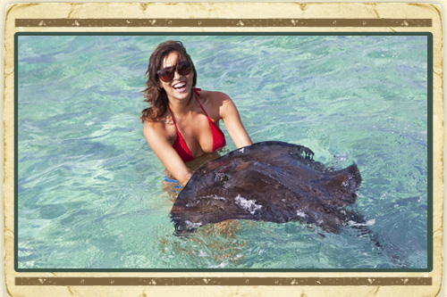 Antigua Safari & Stingray City